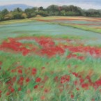 Carol's Poppies by Ann Rhodes