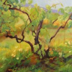 Tiger Mountain Vineyard II by Ann Rhodes