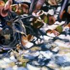 Seagrape Shadows II by Ann Rhodes