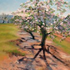Shadow of the Apple Tree, Fine Art by Ann Rhodes