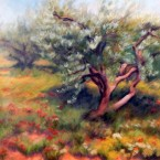 Wind in the Olive Orchard, Ann Rhodes